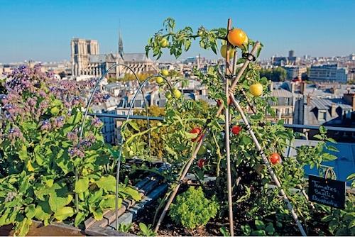 Jardin urbain, partagé- Paris à l'ouest-potager- Galeries Lafayette