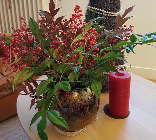 Bouquet du Nandina Domestica pour les fêtes de fin d'année