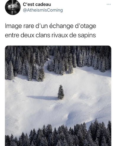 Mamouz Instagram