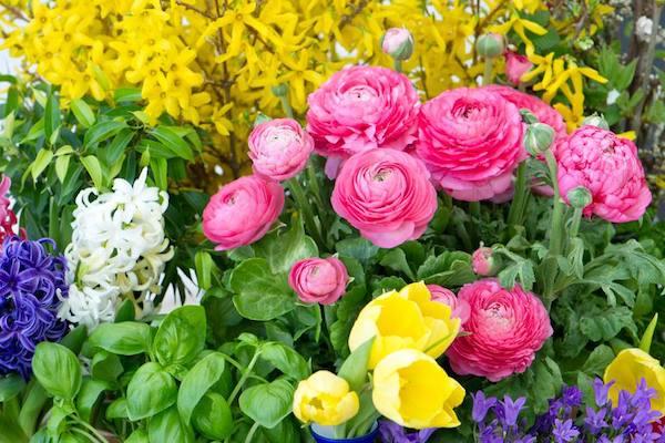 Au printemps c'est le moment de semer